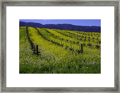 Mustard Grass Landscape Framed Print by Garry Gay