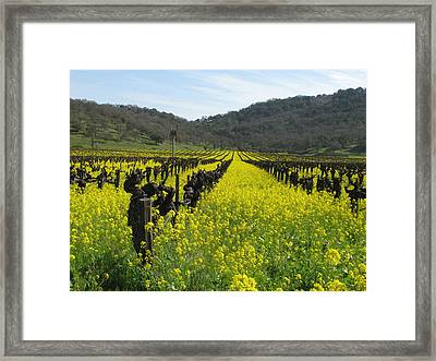 Mustard In The Vineyards Framed Print by Kim Pascu