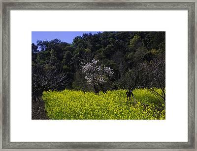 Mustard Meadow Framed Print by Garry Gay