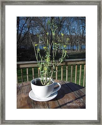 Mustard Seed Plant Cup Framed Print by Deborah Finley