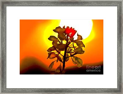 Mustard Sunset Framed Print