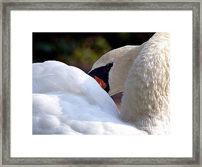 Mute Swan 2a Framed Print by Sharon Talson
