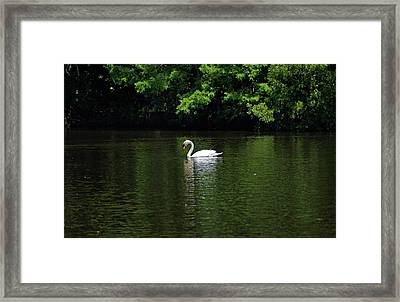 Framed Print featuring the photograph Mute Swan by Sandy Keeton