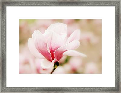 Muted Magnolia  Framed Print by Jessica Jenney