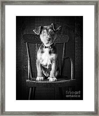 Mutt Black And White Framed Print