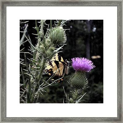 Mutual Attraction Framed Print