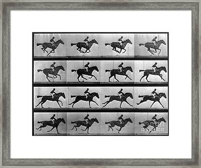 Muybridge Locomotion Racehorse Framed Print by Photo Researchers