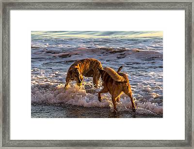 My Ball Framed Print by Shawn Jeffries