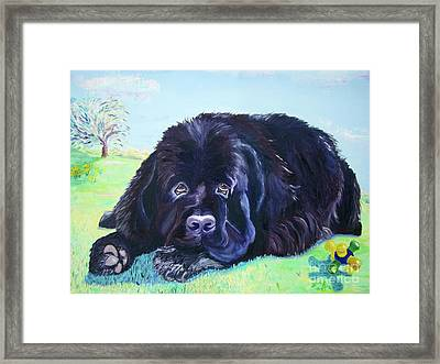 My Bennie Framed Print by Lisa Rose Musselwhite