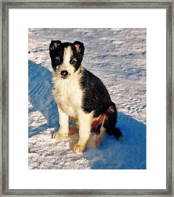 My Best Friend Framed Print by Juergen Weiss
