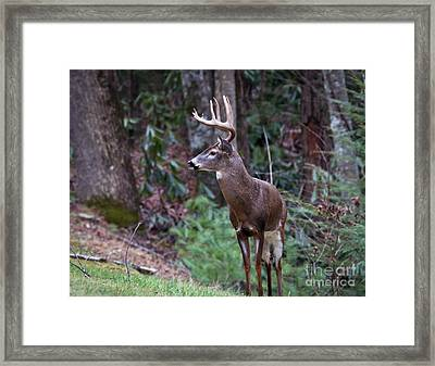 Framed Print featuring the photograph My Best Side by Douglas Stucky