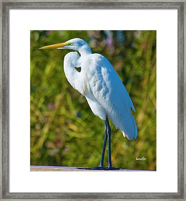 My Better Side Framed Print by Betsy C Knapp