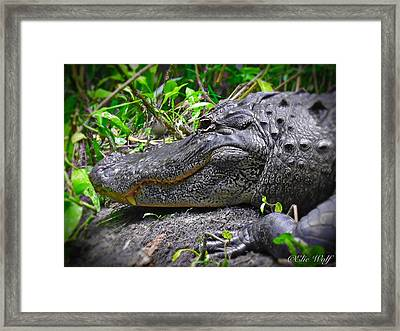 My Big Toothy Grin Framed Print
