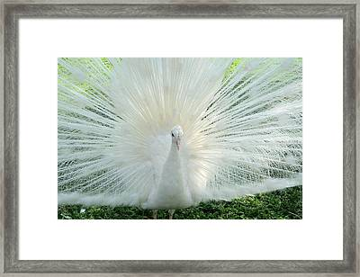My Bird Framed Print