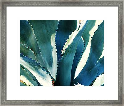My Blue Agave Framed Print