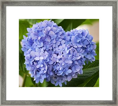 My Blue Heart Framed Print