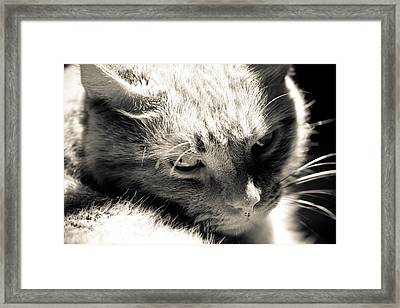My Buddy Framed Print by Edward Myers
