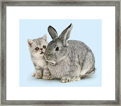 My Bunny Little Friend Framed Print