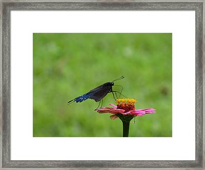 My Butterfly Framed Print