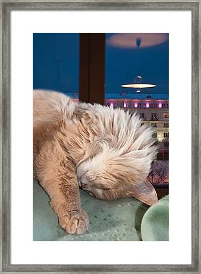 Framed Print featuring the photograph My Cat by Vladimir Kholostykh