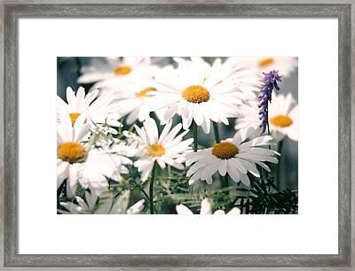 My Daisies Framed Print by Jackie Mueller-Jones