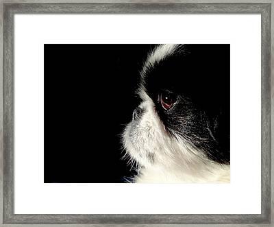 My Daisy Framed Print