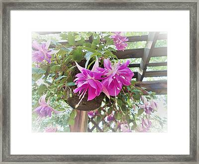 My Day In The Sun Framed Print by Ann Johndro-Collins