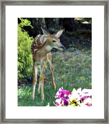 My Deer Friend...... Framed Print