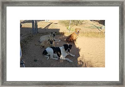 My Dog Family Framed Print by Denise Hamilton