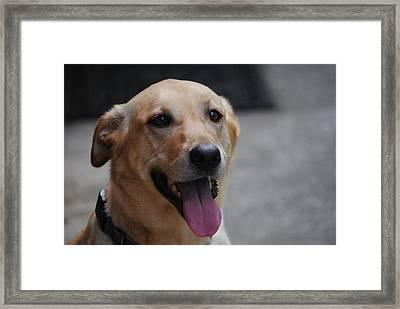 My Dog Ubu Framed Print