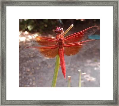My Dragonfly Framed Print by Gail Salitui