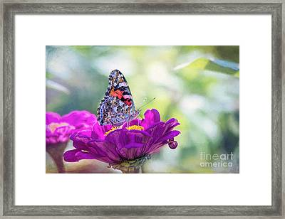 My Fair Painted Lady Framed Print