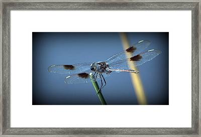 My Favorite Dragonfly Framed Print