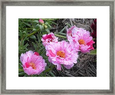 My Favorite Flower Framed Print by Jeanette Oberholtzer