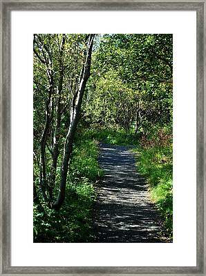 My Favorite Path Framed Print