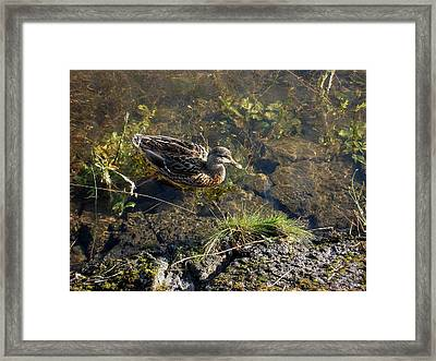My Favorite Place. Framed Print by Marilynne Bull