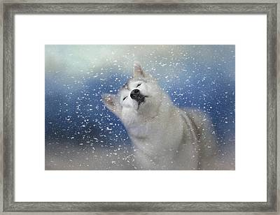 My Favorite Thing About Winter Framed Print by Jai Johnson
