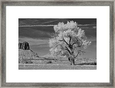 My Favorite Tree  Framed Print by Juls Adams