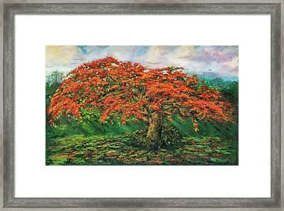 My Flamboyant Tree Framed Print