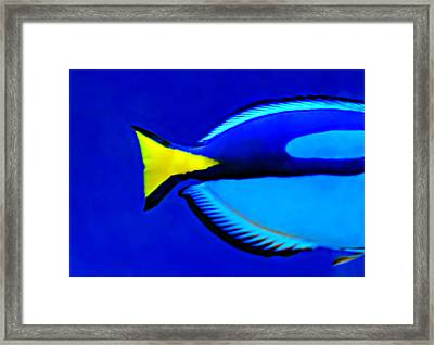My Friend Fin Framed Print by Diana Angstadt