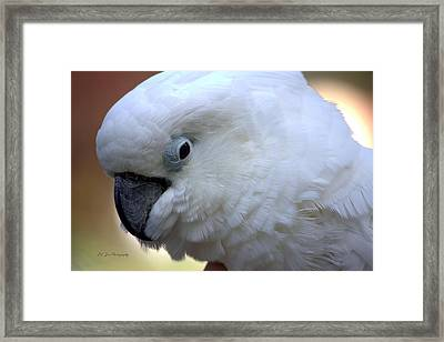 My Friend Rudy Framed Print by Jeanette C Landstrom