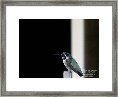 My Friend Stop By Framed Print by Greg Patzer