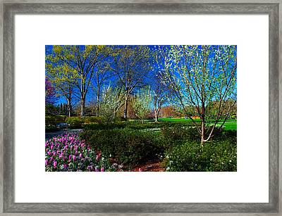My Garden In Spring Framed Print by Diana Mary Sharpton