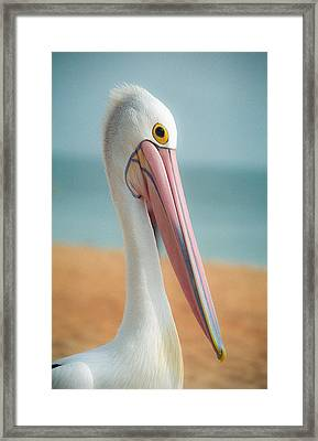 My Gentle And Majestic Pelican Friend Framed Print