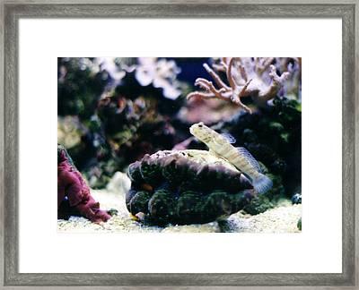 My Goby Friend Framed Print by Steve  Heit