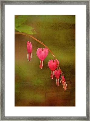 My Heart Bleeds Framed Print