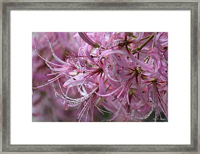 My Heart Is Pink Framed Print