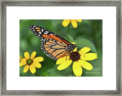 My Heart Is Unwritten Framed Print by Robyn King