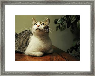 Proud And Confident Framed Print