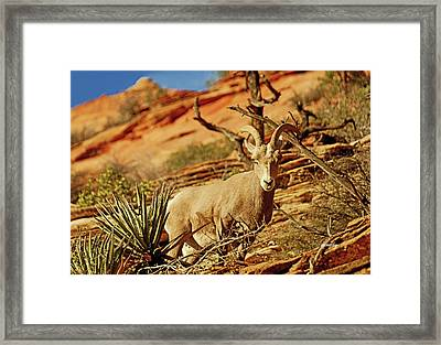 My Home You Can Go Now 7309 Framed Print by David Mosby